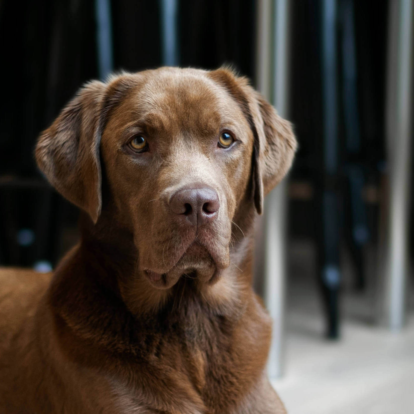 Pelle Dog Feel Good Manager Pulse Advertising